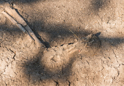 Ancient human foot bone in soil